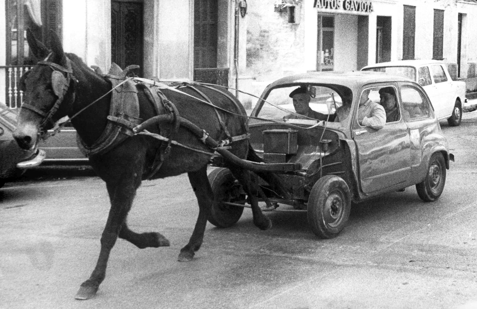 Un Seat 600 sense motor arrossegat per un burro, a Menorca, durant la crisi del petroli del 1974. Fotografia d'Efe.